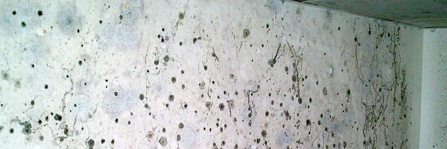 Paredes negras por moho - Humedad por condensacion en paredes ...